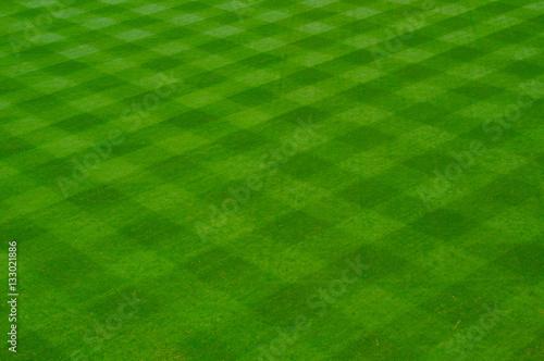 Baseball Grass Canvas Print