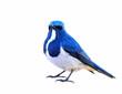 Ultamarine Flycatcher (superciliaris ficedula) beautiful blue an