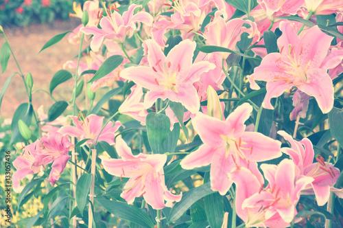 pole-lilie-z-rocznika-odcien