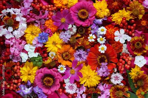 Colorful background of flowers, top view. Fototapeta