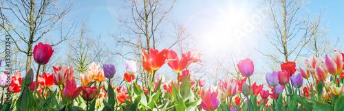 Foto op Canvas Tulp Glück, Lebensfreude, Frühlingserwachen, Leben: Buntes, duftendes Blumenfeld im Frühling :)