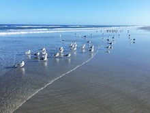 A Flock Of Seagulls And Terns ...