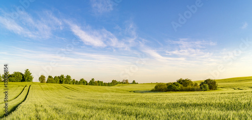 panorama spring green field Wallpaper Mural