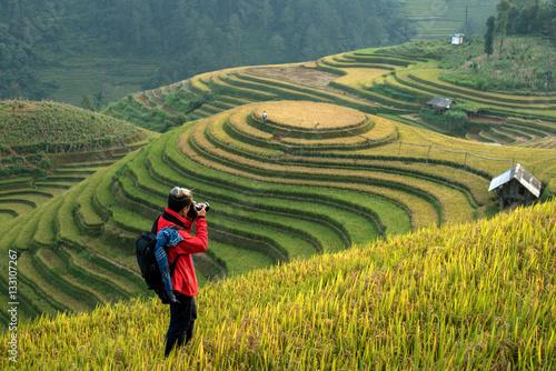 Garden Poster Rice fields Photography in vietnam