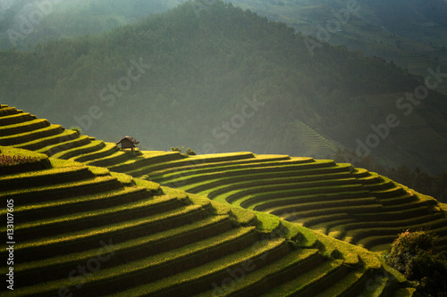 Garden Poster Rice fields The beautiful rice terraces
