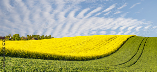 Foto auf Gartenposter Landschappen panorama spring green field