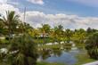 Beautiful views of the palm tree, Cuba
