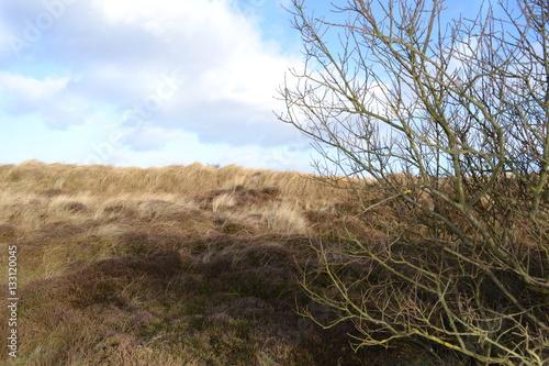 Fotografija  marshland grass