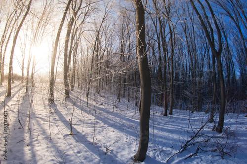 Fotografie, Obraz  Winter forest in sunny day fisheye
