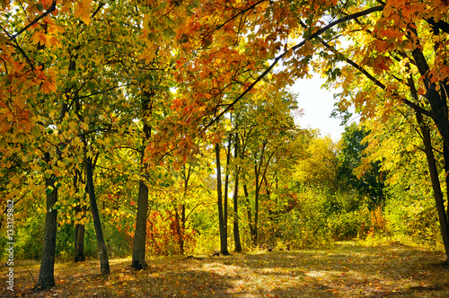 autumn forest and fallen yellow leaves © alinamd