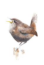 Bird Wren Watercolor Painting ...