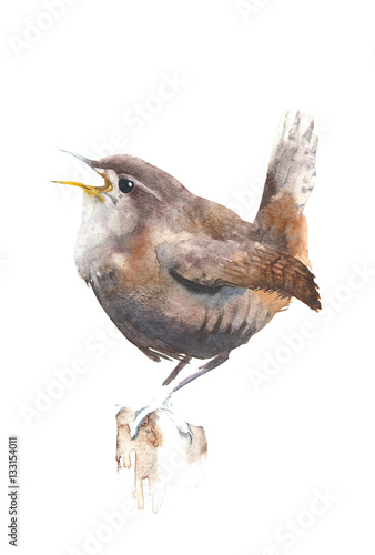 Fotografie, Obraz  Bird wren watercolor painting illustration isolated on white background