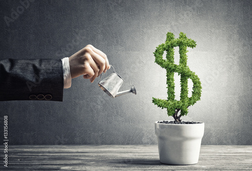 Fotografía  Concept of investment income and growth with money tree in pot