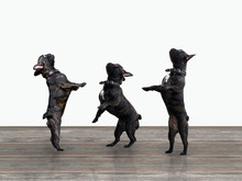 Three Black Dogs Standing On Their Hind Legs. Wooden Floor, White Wall. French Bulldogs