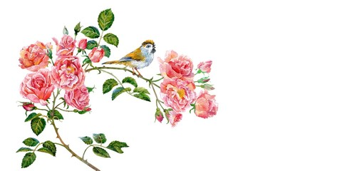 Fototapeta Róże Branch of pink roses and little bird. Watercolor.