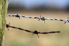 Barbed Wire And Post.