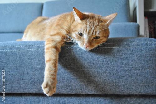 Obraz Rudy kot na szarej kanapie - fototapety do salonu
