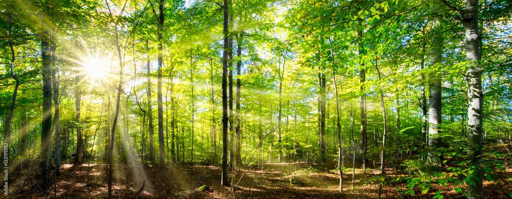 Fototapeta Grüner Wald im Frühling und Sommer