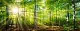 Fototapeta Las - Grüner Wald im Frühling und Sommer