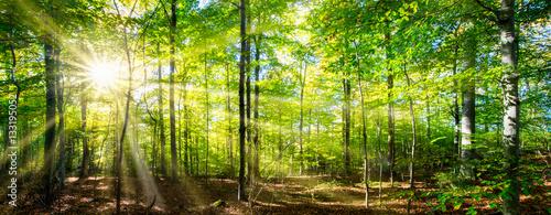 Tuinposter Zwart Grüner Wald im Frühling und Sommer