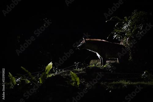 Cadres-photo bureau Hyène Silhouette of one hyena