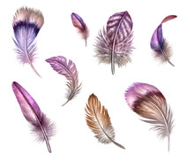 Watercolor Illustration, Pink Feather Clip Art, Easter Design Elements Set, Isolated On White Background