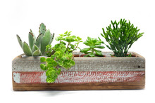 Various Type Of Succulent Cactus Plant In Wooden Box