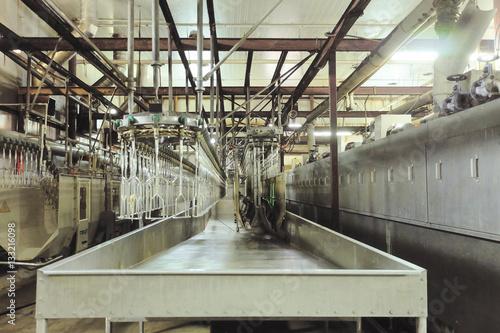 Chicken factory line Wallpaper Mural