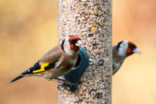 Goldfinch Feeder