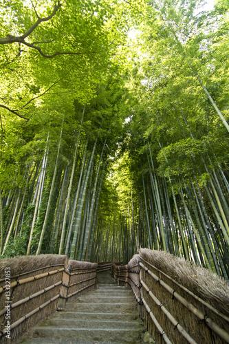 Bamboo path in Arashiyama, Kyoto, Japan