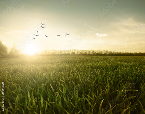 Green field of birds