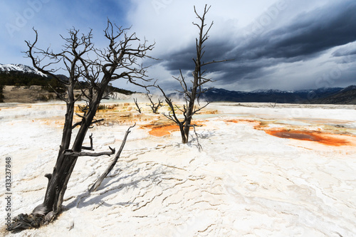 Two dead trees in hot spring earth