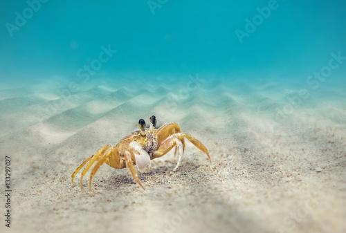 Underwater, Crab on the sandy bottom