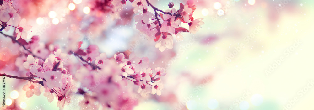 Fototapety, obrazy: Spring border or background art with pink blossom. Beautiful nature scene with blooming tree and sun flare