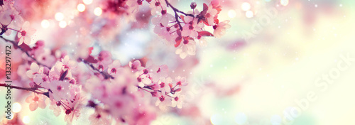 Poster Trees Spring border or background art with pink blossom. Beautiful nature scene with blooming tree and sun flare