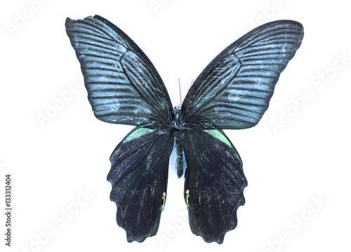 Foto  бабочка, коллекция бабочек на белом фоне изолированных