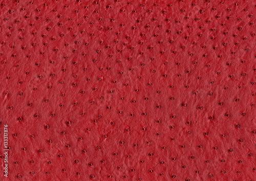 Stickers pour porte Autruche ostrich leather surface