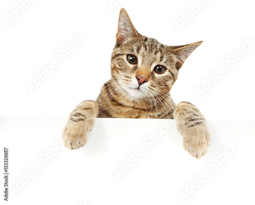 Foto op Plexiglas Kat Bengal cat looking over a sign