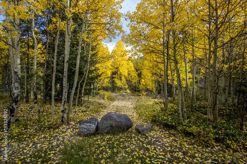 Colorado Fall Rocks