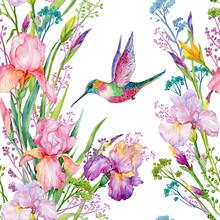 Iris Flowers And Hummingbirds .watercolor Seamless Pattern