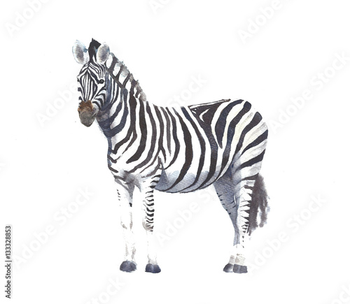 Poster Zebra Zebra animal watercolor painting illustration hand made isolated on white background greeting card