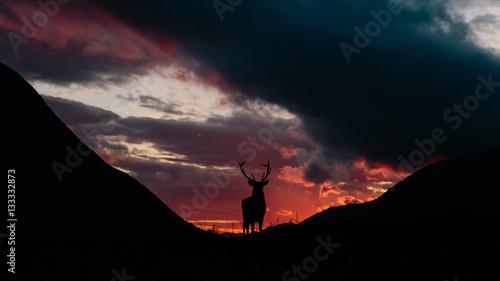 Photo  Scotland, the Monarch of the Glen