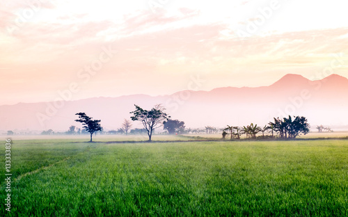 Foto auf Gartenposter Reisfelder Very vast, broad, extensive, spacious rice field, stretched into the horizon. Behind it is a line of hills and mountains that also expansive. Group of tree in far away. Beautiful red cloud and red