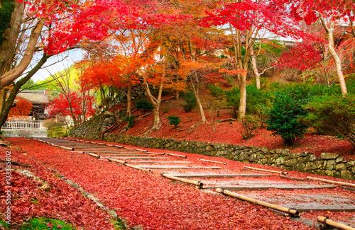 Papiers peints Kyoto Japan Kyoto autumn image. Red leaves foliage on the entrance passage to Bishamon-do.