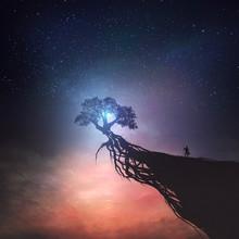Tree And Night Sky