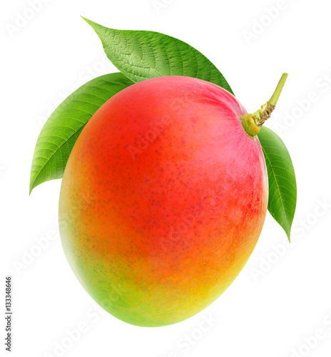 Isolated mango. Whole mango fruit on a branch isolated on white background with clipping path