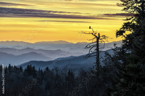 Fotografie, Obraz  Smoky Mountains, scenic sunset, owl in tree