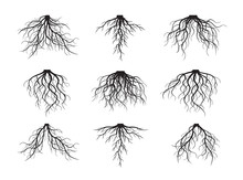 Set Of Black Roots. Vector Ill...