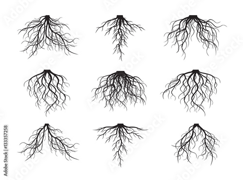 Tablou Canvas Set of Black Roots. Vector Illustration.