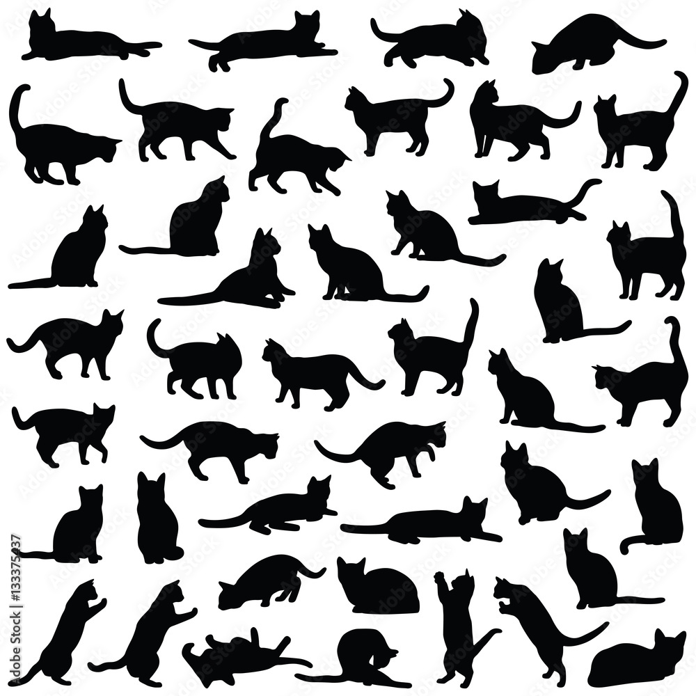 Fototapeta Cat collection - vector silhouette